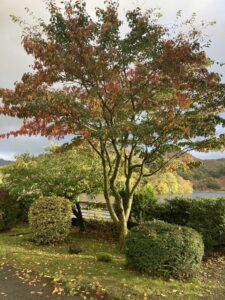 autumn at Nab Cottage